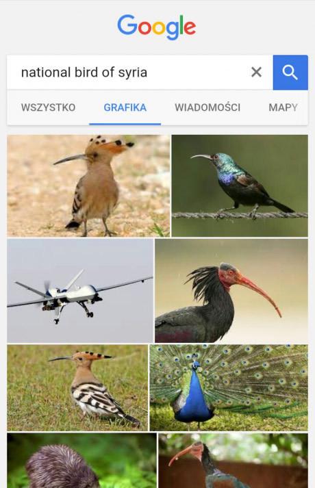aves - meme