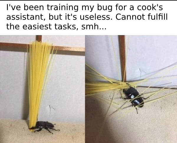 I've been training my bug for a cook's assistant, but it's useless - meme
