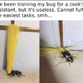 I've been training my bug for a cook's assistant, but it's useless