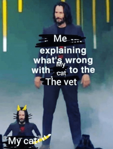 My cat is meowing - meme