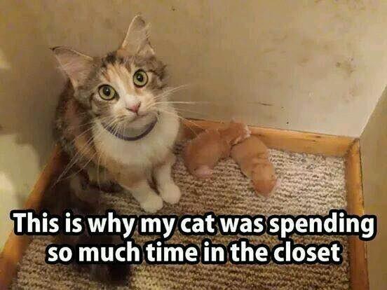Cat had kittens - meme