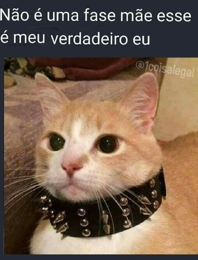 Gato emo - meme