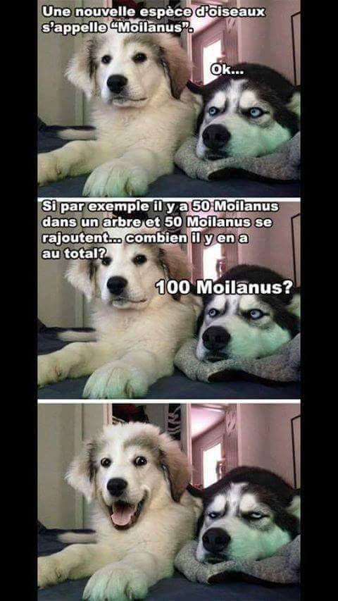 Oh le chien - meme