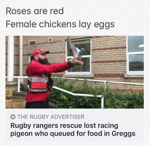 Hungry pigeon - meme