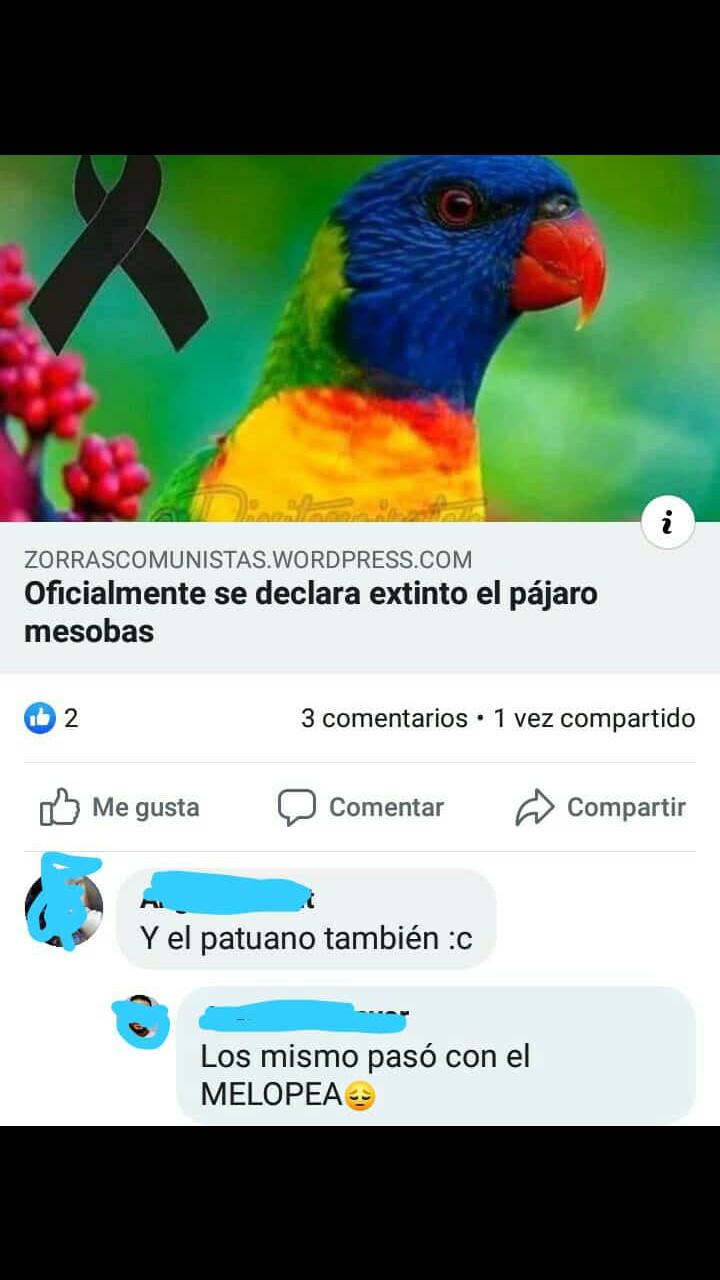 El pájaro mesobas - meme