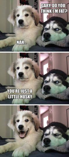 Dog jokes - meme