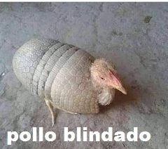 pollo blindado - meme