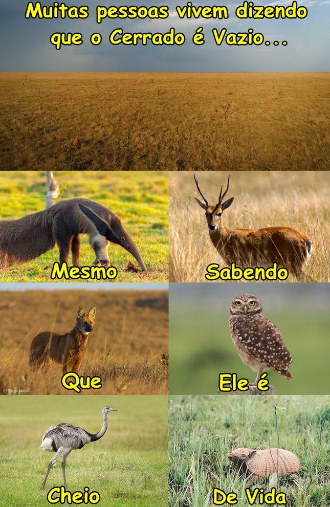 Natureza do Brasil não é só Floresta - meme