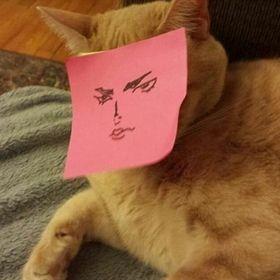 gato sensual - meme