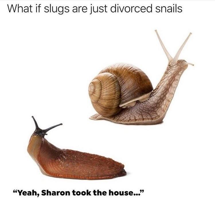 Sharon took the house - meme