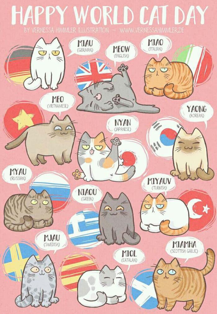 Miao - meme