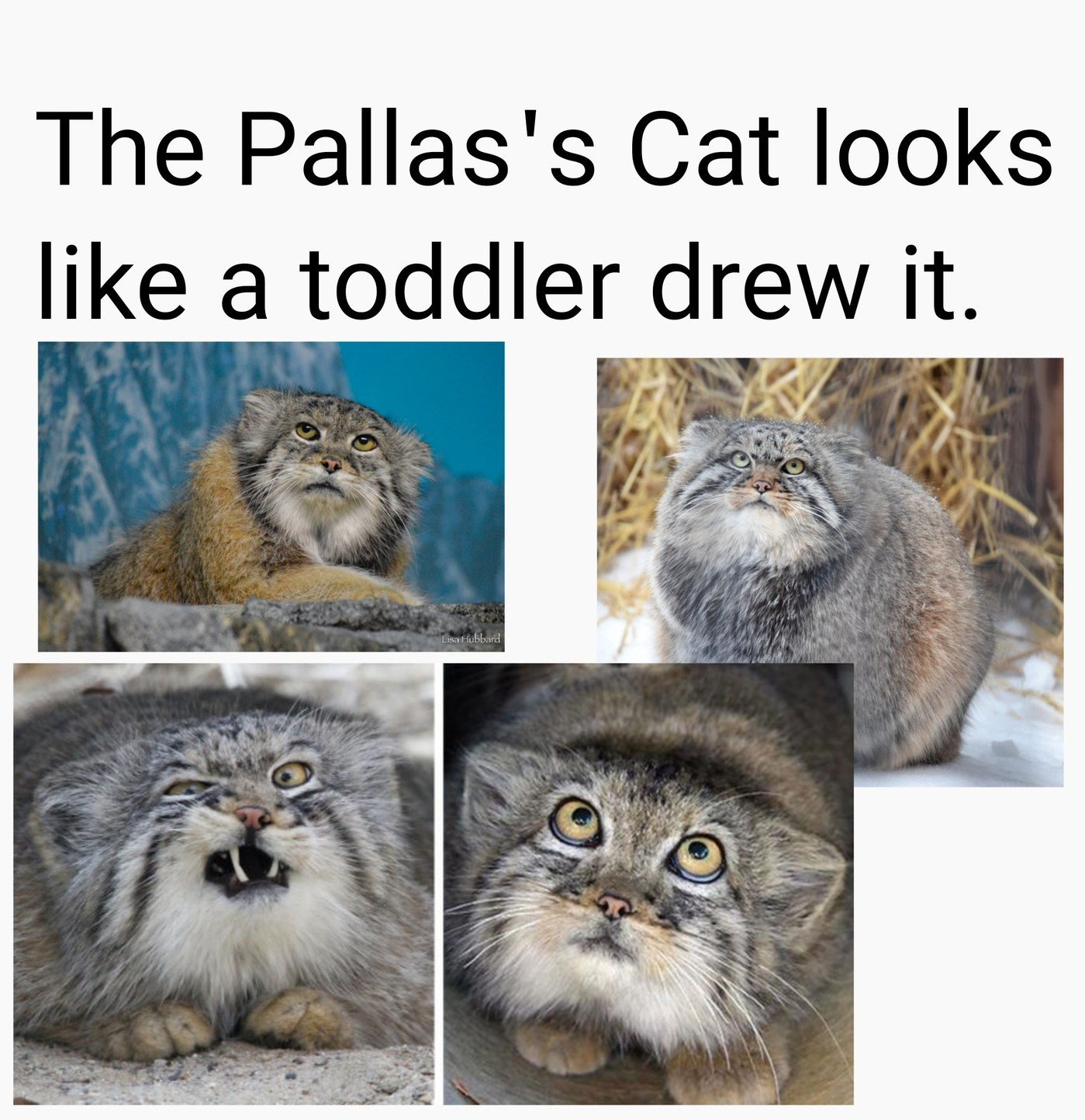 Still cute af tho - meme
