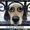 Doggo 100