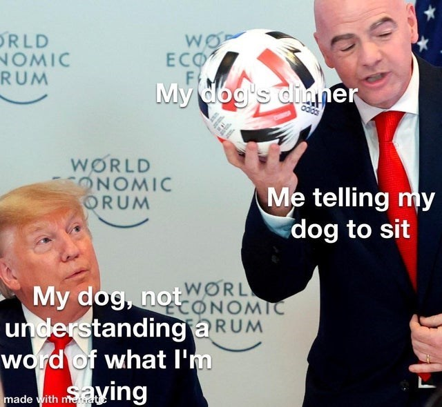 Dogs can be dumb most times - meme