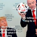 Dogs can be dumb most times