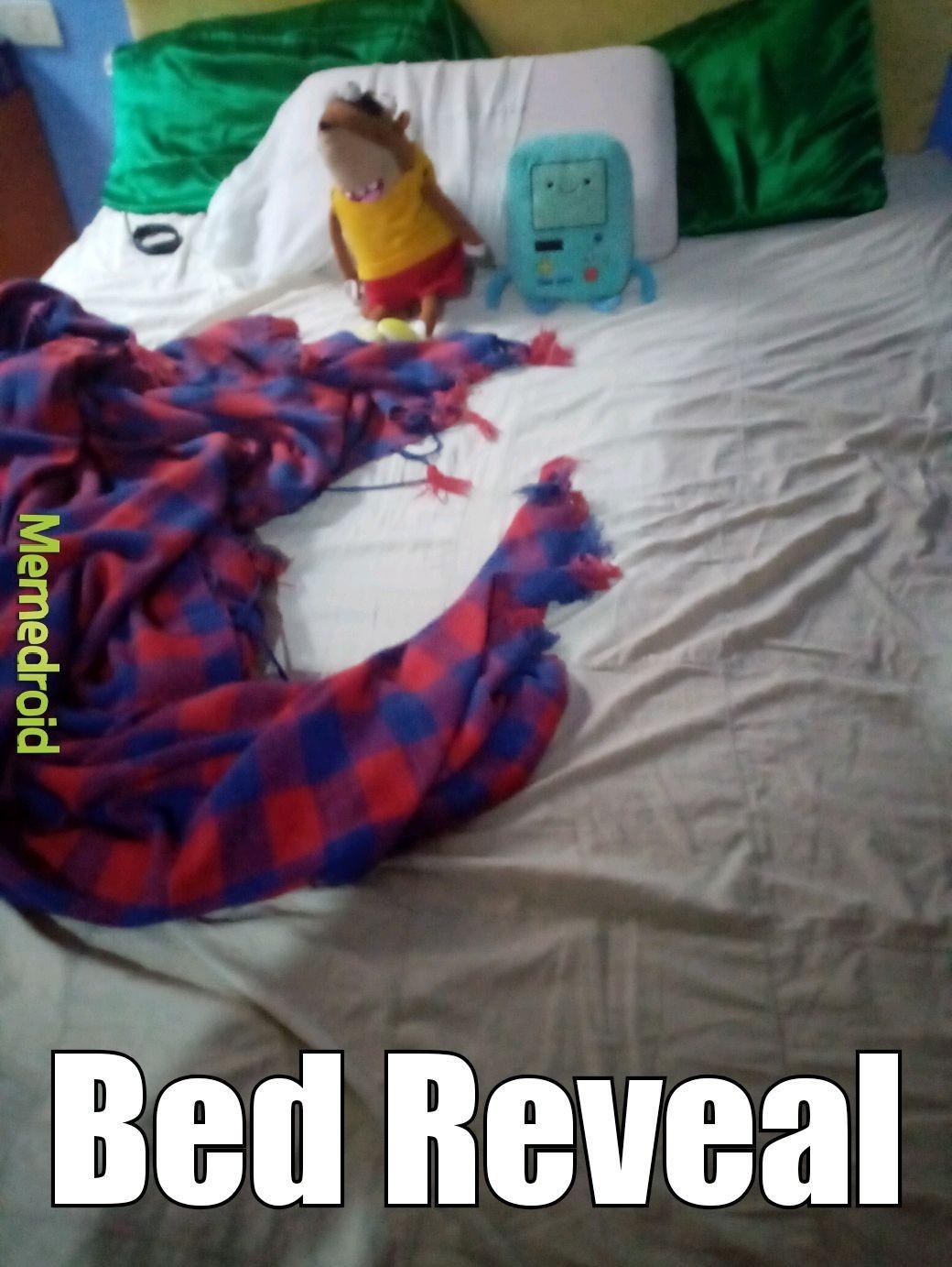 bed reveal - meme