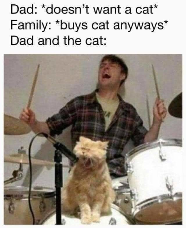 getting a catto was a good idea after all - meme