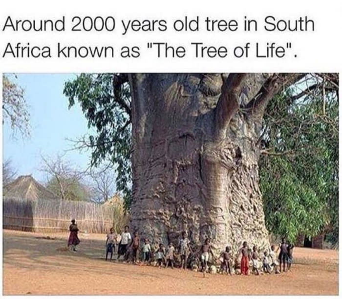 The Tree of Life, in South Africa - meme