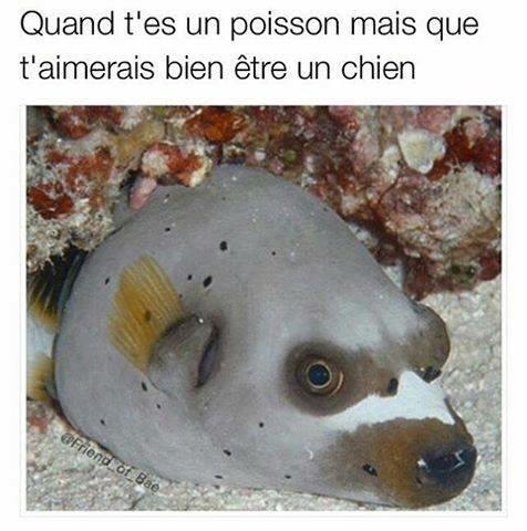 poisson-chat - meme