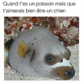 poisson-chat