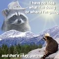 inspirational raccoon