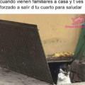Gato resaca