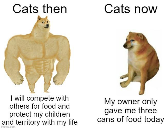 My cat is kinda fat - meme