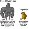 Evolution of dogs