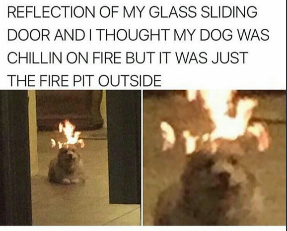 fire dog - meme