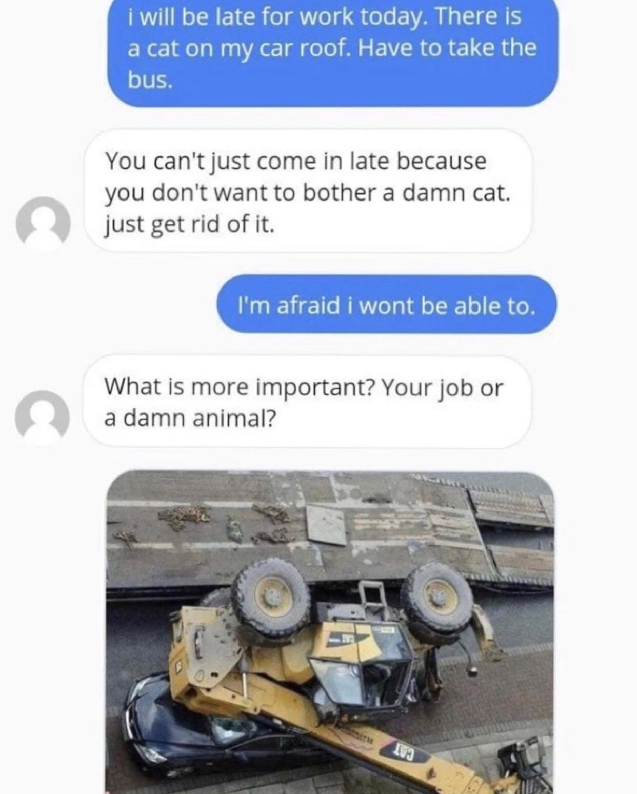 CAT ON MY ROOF - meme
