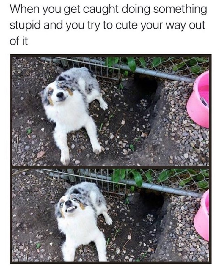 Cute the Way out - meme