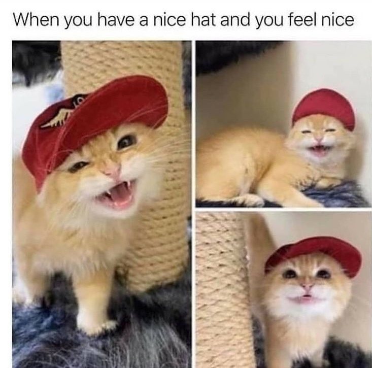 cat knows how to accessorize - meme