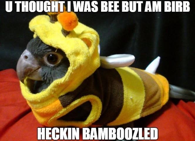 Heckin bamboozled birb - meme