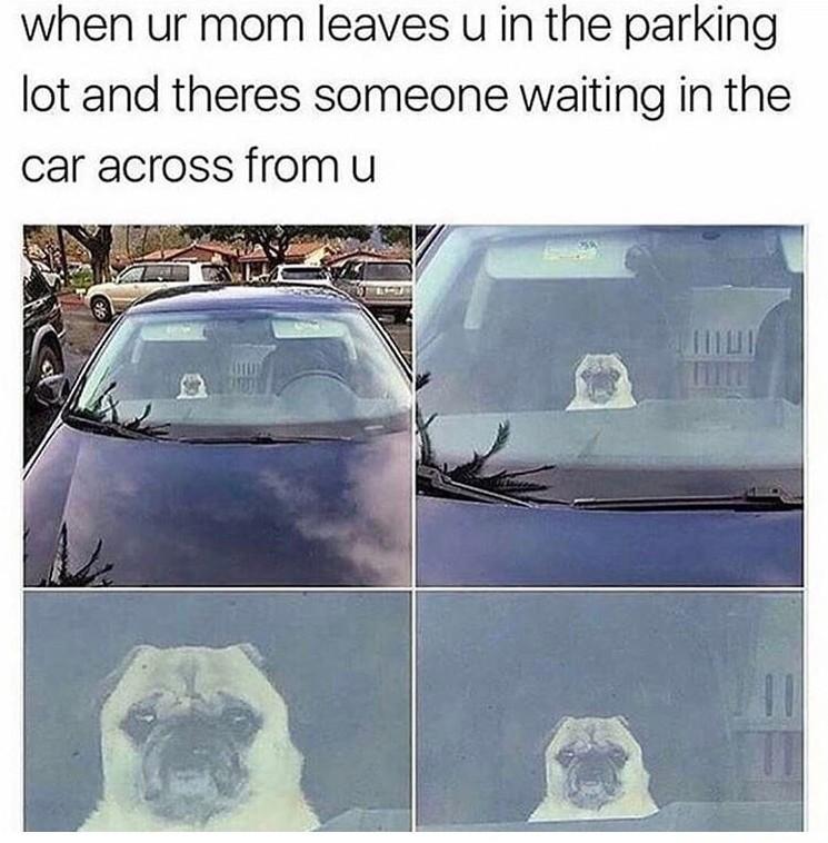 Puggles - meme