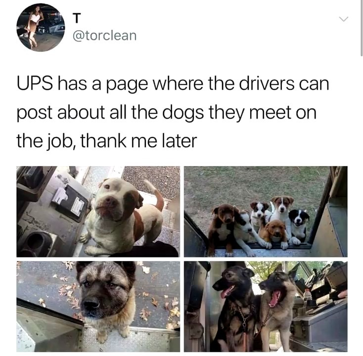 Mail Doggos - meme