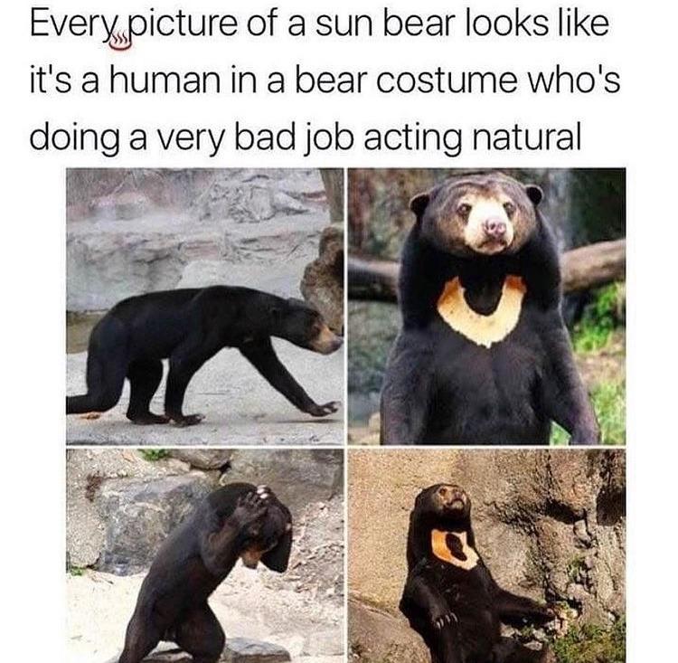 they do look suspicious - meme