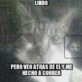 Pobre gato