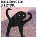 Pobresita bacteria
