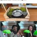 E se o cachorro comer as plantas?