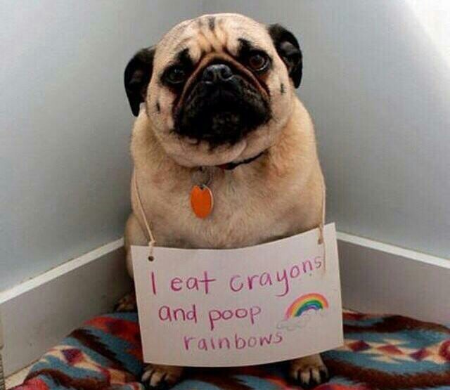 And my farts are rainbows - meme
