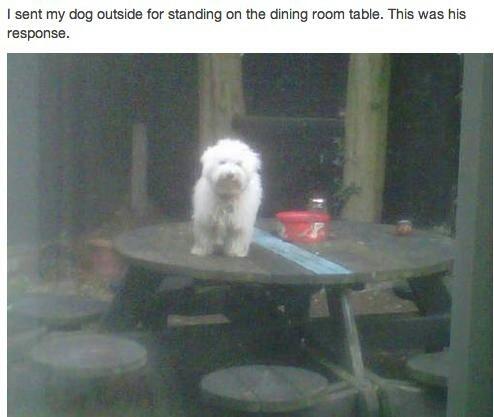 Table doggerino - meme