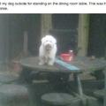 Table doggerino