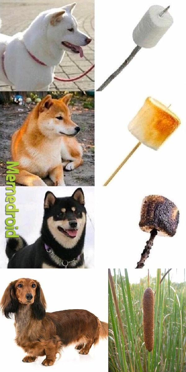 Chineses: hum! Cachorrinho. - meme