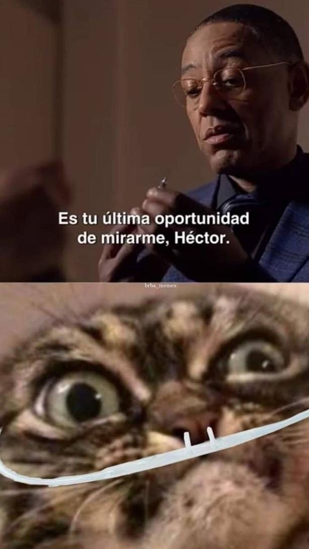 perdón por el chiste interno (De: BrBa_memes)