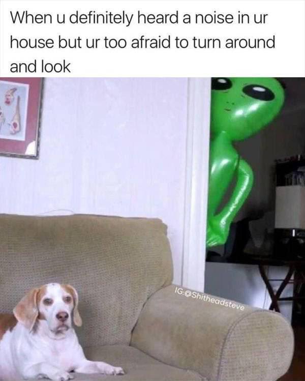 Brave dog - meme
