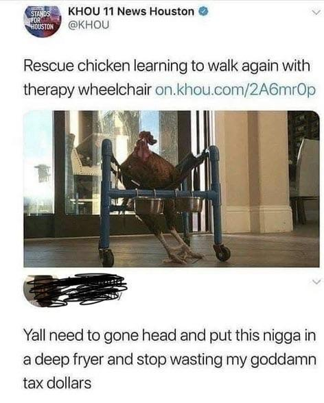 Rescue chicken learning to walk again with therapy wheelchair - meme