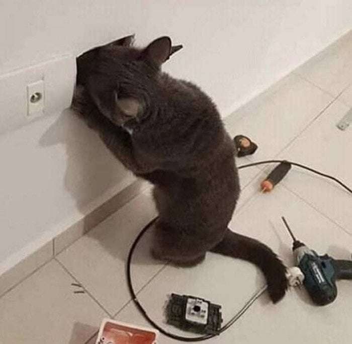 I found a new electrician   gagbee.com - meme