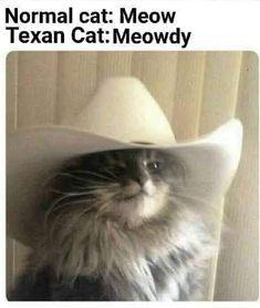 I love Texan cats - meme