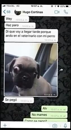 Pinshe perro valió verga - meme