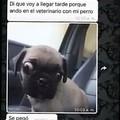 Pinshe perro valió verga